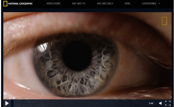 Why Your Eyes Are a Window to Your Health | Health and
