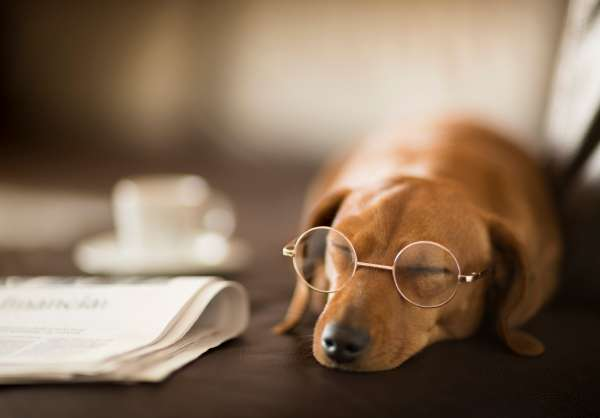 Ensure Your Pets' Eye Health Is up to Snuff This National Dog Day